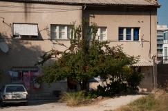 Splitgrad