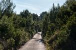 Bisevo road up