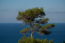 one pine