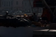 Vis fisherma