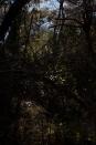 inside Marjan forest